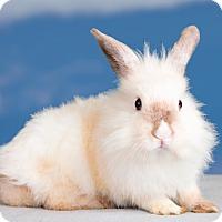 Adopt A Pet :: Razzle - Marietta, GA