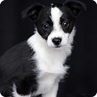 Adopt A Pet :: Einstein - SAN PEDRO, CA