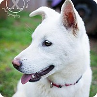 Adopt A Pet :: Taylor - Eugene, OR