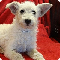Adopt A Pet :: Snickers - Vacaville, CA