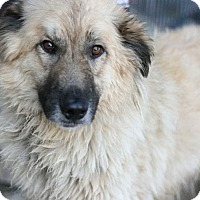 Adopt A Pet :: Louchi - Canoga Park, CA