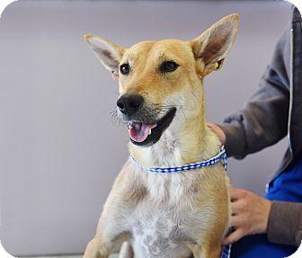 Terrier (Unknown Type, Medium)/German Shepherd Dog Mix Dog for adoption in Los Angeles, California - Florence