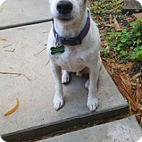 Adopt A Pet :: Zach - Miami, FL