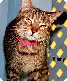 Domestic Shorthair Cat for adoption in Arkadelphia, Arkansas - Bunny