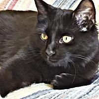 Adopt A Pet :: Bella - El Dorado Hills, CA