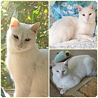 Adopt A Pet :: Ridley - Spring Brook, NY