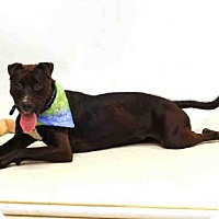 Adopt A Pet :: PEPPERMINT - Sanford, FL