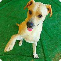 Adopt A Pet :: Trooper #2 - Graceville, FL