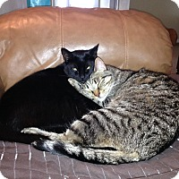 Adopt A Pet :: Mitzie and Kitkat - Sarasota, FL