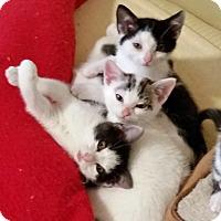 Adopt A Pet :: Bonnie - Salem, OR