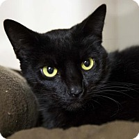 Adopt A Pet :: Camero - Kettering, OH
