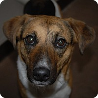 Adopt A Pet :: Chelsea - Wilmington, OH