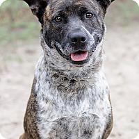 Adopt A Pet :: Checkers - Pensacola, FL