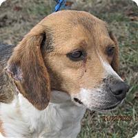 Adopt A Pet :: Ellie - Germantown, MD