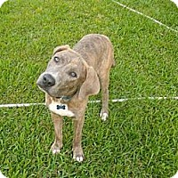 Adopt A Pet :: Andy - Rayville, LA