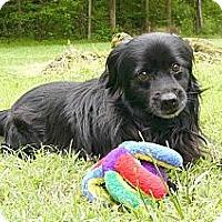 Adopt A Pet :: Inky - Mocksville, NC