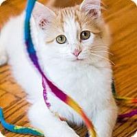 Adopt A Pet :: Flan - Chicago, IL