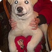 Adopt A Pet :: Irish - Allentown, PA