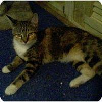Adopt A Pet :: Libby - Portland, ME