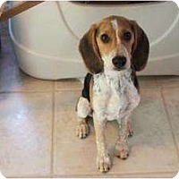 Adopt A Pet :: Walter Lou - Phoenix, AZ