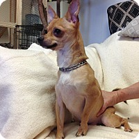 Adopt A Pet :: Carlton - Phoenix, AZ
