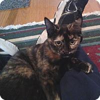 Adopt A Pet :: Serena - Colmar, PA