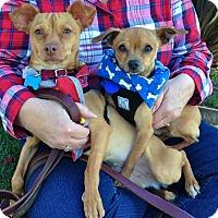 Adopt A Pet :: *URGENT* Susie & Yogi - Van Nuys, CA