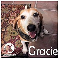 Adopt A Pet :: Gracie - Novi, MI