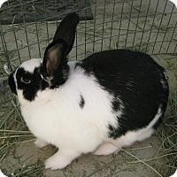 Adopt A Pet :: Shadow - Bonita, CA