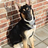 Adopt A Pet :: Jake - Keller, TX