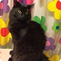 Adopt A Pet :: Wookey - Vancouver, BC