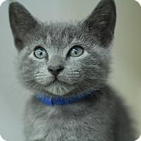 Adopt A Pet :: Little Dipper - Richmond, VA