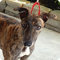 Adopt A Pet :: AnnaBelle - Florence, KY