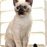 Adopt A Pet :: Tinkerbell - Davis, CA