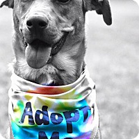 Adopt A Pet :: Petey - Baton Rouge, LA