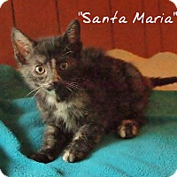 Adopt A Pet :: Santa Maria - Ocean City, NJ