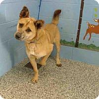 Adopt A Pet :: A489583 is in danger at San Bernardino City - Beverly Hills, CA