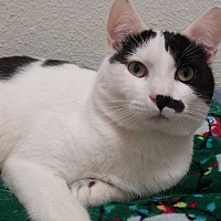 Adopt A Pet :: Julius - Oakland, OR