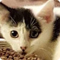 Adopt A Pet :: Jaxon - New York, NY