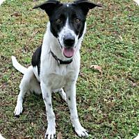 Adopt A Pet :: Pansey - Lufkin, TX
