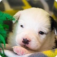 Adopt A Pet :: Nemo - $250 - Seneca, SC