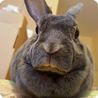 Adopt A Pet :: Myrtle - Conshohocken, PA