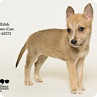 Adopt A Pet :: Edith - Baton Rouge, LA