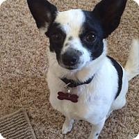Adopt A Pet :: Sadie - PENDING - Grafton, WI