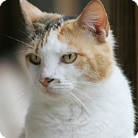 Adopt A Pet :: Dott - North Fort Myers, FL