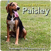 Adopt A Pet :: Paisley - Poland, IN