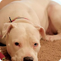 Adopt A Pet :: Angel - Willingboro, NJ
