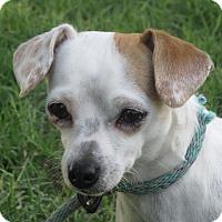 Adopt A Pet :: Bailee - Turlock, CA