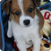 Adopt A Pet :: Clover - South Saint Paul, MN