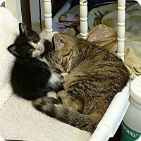 Adopt A Pet :: Biscuit - Texarkana, AR